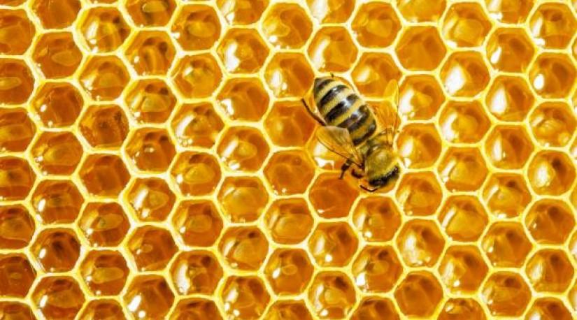 Турция ведущий экспортёр мёда в мире