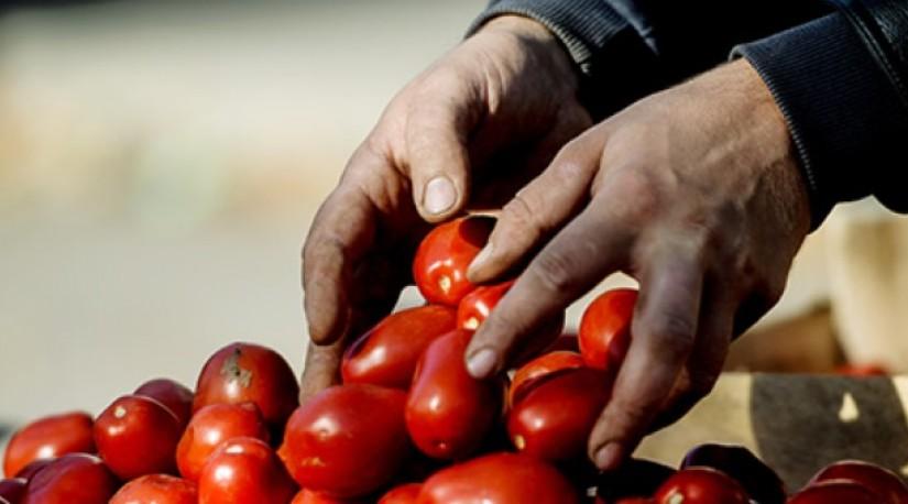По рукам: Россия и Турция не сошлись в помидорах