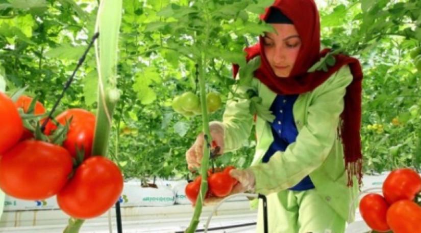 Россельхознадзор проверил ряд производителей томатов из Турции