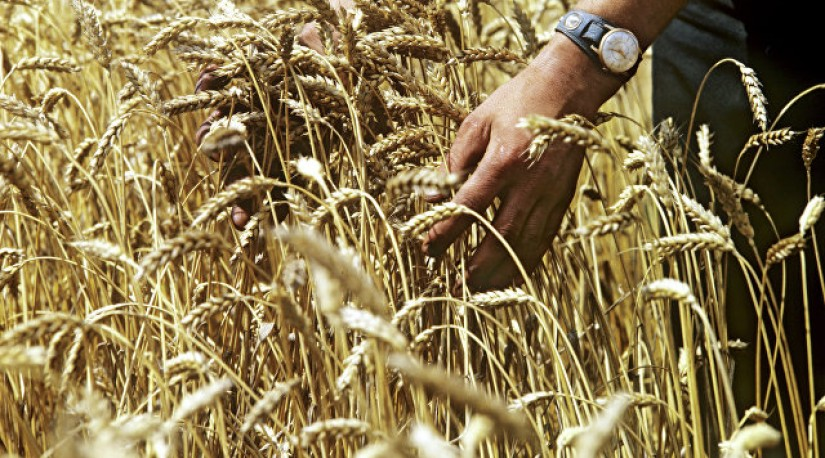 Турция может обеспечить себя пшеницей