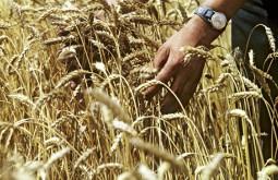 Турция сняла ограничения на ввоз российской пшеницы